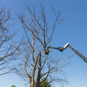 New! GMT Total Tree Control